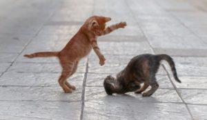 Cat Playpen