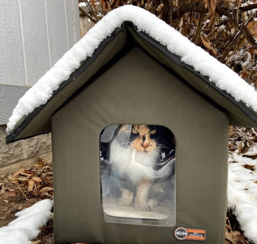 Cat House During Winter