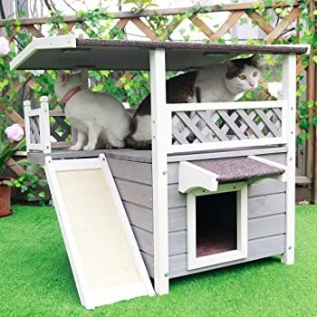 Multiple Cats Outdoor House