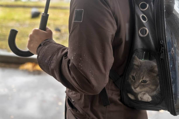 Calm cat on a walk in backpack