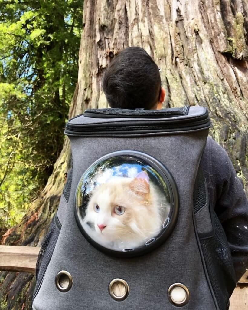 Cat backpack for big cat
